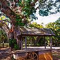 Under The Shadow Of The Tree. Eureka. Mauritius by Jenny Rainbow
