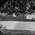 Under The Tree by Daniel R Penola III