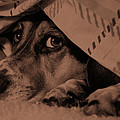 Undercover Hound by Paul Wash