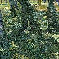 Undergrowth by Vincent van Gogh