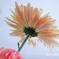 Underside Of Daisy by Terry Weaver