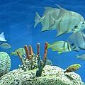 Underwater Beauty by Maria Urso