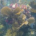 Underwater Colors by Adam Jewell