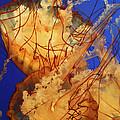 Underwater Friends - Jelly Fish By Diana Sainz by Diana Raquel Sainz