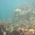 Underwater - Long Boat Tour - Phi Phi Island - 011381 by DC Photographer