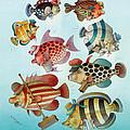 Underwater Story 01 by Kestutis Kasparavicius