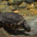 Underwater Turtle by Maria Urso