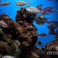 Underwater View by Michal Bednarek