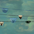 Underwear On A Washing Line  by Jasna Buncic