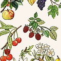 Unidentified Montage Of Fruit by English School