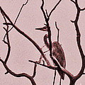 Unknown Bird by Minding My  Visions by Adri and Ray