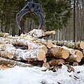Unloading Firewood 3 by Jeelan Clark