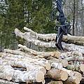 Unloading Firewood 4 by Jeelan Clark