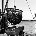 Unloading Fish From Monterey's Wharf Two Circa 1950  by California Views Archives Mr Pat Hathaway Archives
