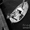Unloading Fish At Wharf Two Monterey  Circa 1950  by California Views Mr Pat Hathaway Archives