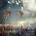 Unloved Flowers by Istvan  Kadar