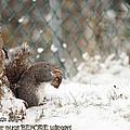 Unprepared For Winter by Robin Martin