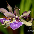 Unusual Orchid by Living Color Photography Lorraine Lynch