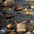 Up A Creek by Marvin Borst
