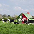 Up Mayo by Bill Cannon