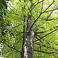 Up The Oak Tree by Vicki Podesta