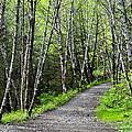 Up The Trail by Cathy Mahnke