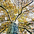 Up The Tree by Alice Gipson