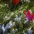 Upcoming Winter by Eduard Moldoveanu