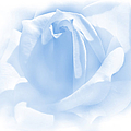 Upon A Cloud Blue Rose Flower by Jennie Marie Schell