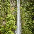 Upper Multnomah Falls by Carrie Cranwill