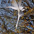 Upside Down Egret by Timothy Flanigan