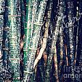 Urban Bamboo by Aubrey  Strawberry
