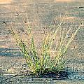 Urban Grass by Gary Richards