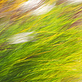 Urban Nature Fall Grass Abstract by Christina Rollo