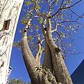 Urban Trees No 1 by Ben and Raisa Gertsberg