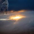 Ursa Major  -  Great Bear by Kevin Bone