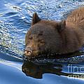 Ursa Mirrored by Mike  Dawson