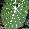 Us Botanic Garden - 121212 by DC Photographer