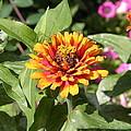 Us Botanic Garden - 121221 by DC Photographer