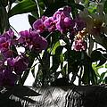 Us Botanic Garden - 121231 by DC Photographer