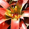 Us Botanic Garden - 12124 by DC Photographer