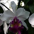 Us Botanic Garden - 121244 by DC Photographer