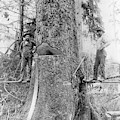Us Forestry by Library Of Congress