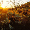 Usa, Arizona, Sonoran Desert, Ocotillo by Panoramic Images