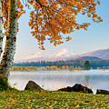 Usa, Oregon, Bend, Fall At Black Butte by Hollice Looney