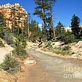 Utah Stream by Ted Pollard