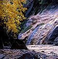 Utah - Zion National Park Virgin River 8 by Terry Elniski
