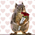 Valentines Day Squirrel With A Dozen Red Roses by Peggy Collins