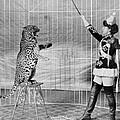 Vallecitas Leopards. Female Animal by Everett