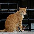 Valletta Cat by Joseph Yarbrough
